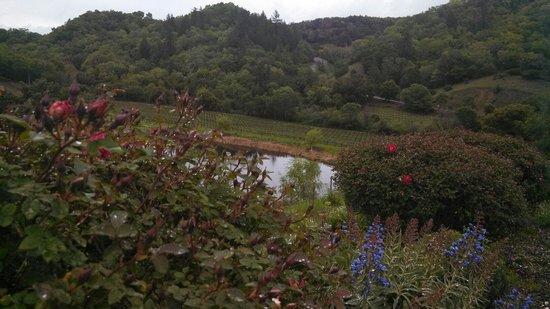 Fritz Underground Winery: Raindrops dot landscaping.