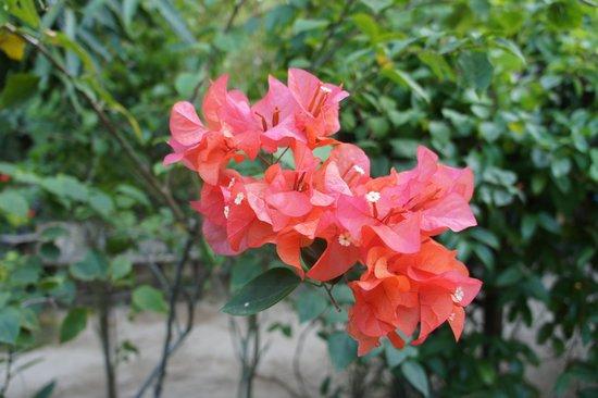 Greenviews Resort Corong-Corong: plantes