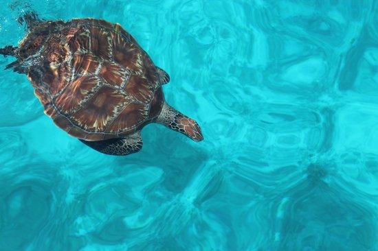 The Natural Resort: Фото с катера,морская черепаха в море