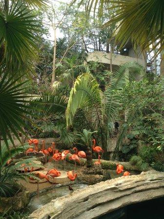 Dallas World Aquarium: Flamingo area