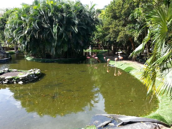 Grand Palladium Colonial Resort & Spa: Flamingos