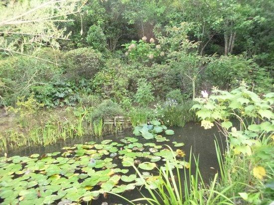 Chichu Art Museum : モネの池