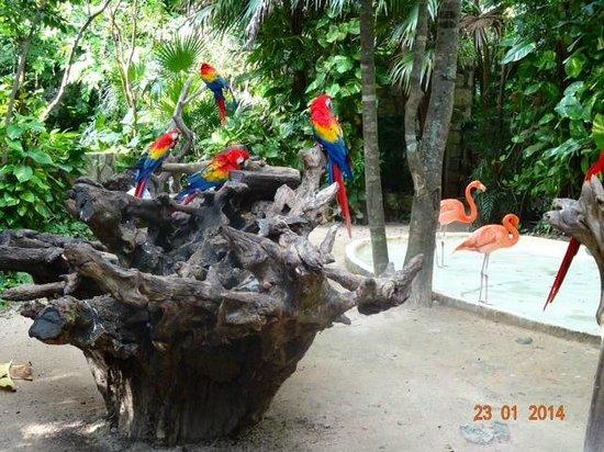 Hotel Riu Cancun: Xcaret
