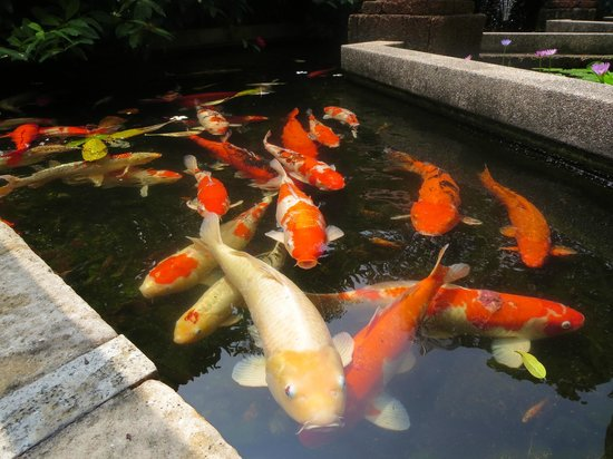 Indra Regent Hotel : feeding fish