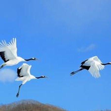 Akan International Crane Centre: 大空にはばたく丹頂鶴たち