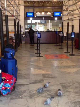 "Courtyard Sacramento Airport Natomas: Pigeons ""Living It Up"" on ""Cheez-It's"" Provided By Travelers Inside Sacramento Amtrak Station (S"