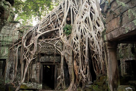 Khemara Angkor Hotel & Spa: Храмовый комплекс Та Пром