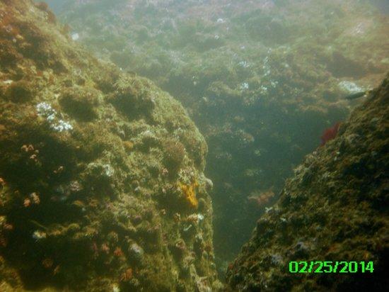 Sea Explorers Malapascua: Amazing!