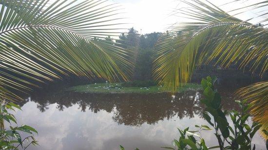 Hotel Sumadai: озеро