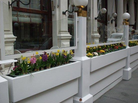 Café Sacher Wien: Frühlingsblumen haben mein Herz erfreut