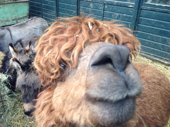 Wetheriggs Animal Rescue Centre: Cheeese