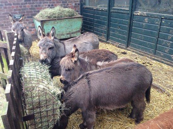 Wetheriggs Animal Rescue Centre: Donkeys
