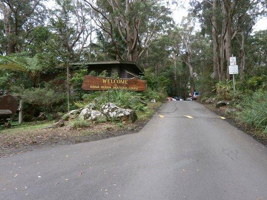 Binna Burra Mountain Lodge: Welcome to Rainforest Paradise