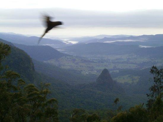 Binna Burra Mountain Lodge: Nature close at hand on the deck