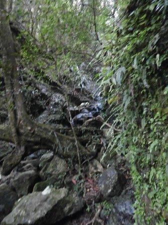 Binna Burra Mountain Lodge : Rainforest