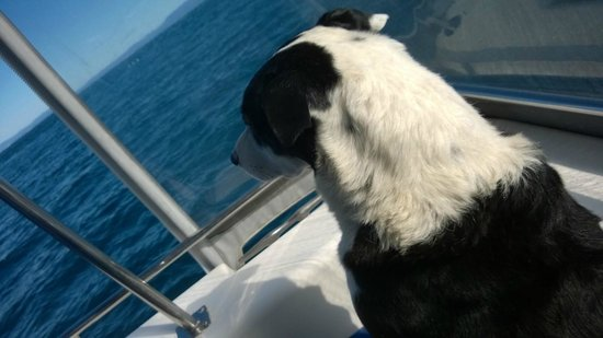"""Wineglass Bay Cruises: Rastus, the """"First Mate"""" and Dolphin Spotter"""