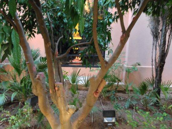 Royal Mansour Marrakech : Garden