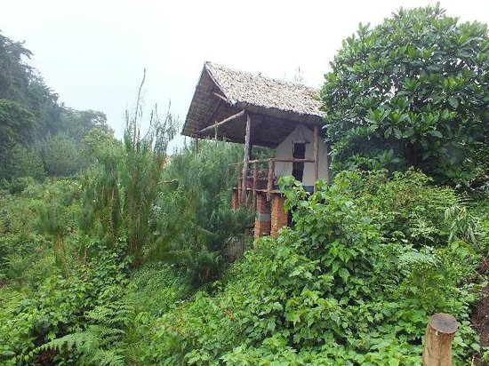 Broadbill Forest Camp : The tent.