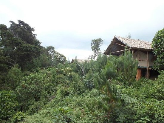 Broadbill Forest Camp : Well spaced Tents.