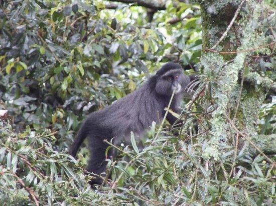 Broadbill Forest Camp : Blue Monkeys are regular visitors.