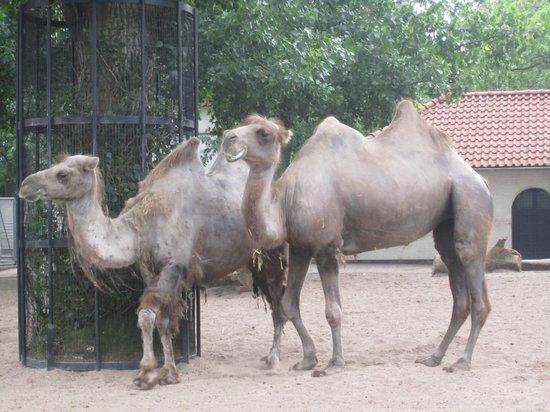 Artis Zoo : в зоопарке