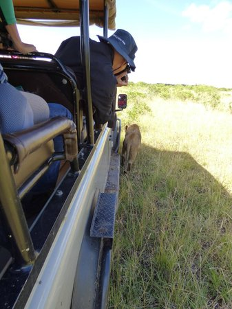 Saruni Mara : yep, that's our jeep.