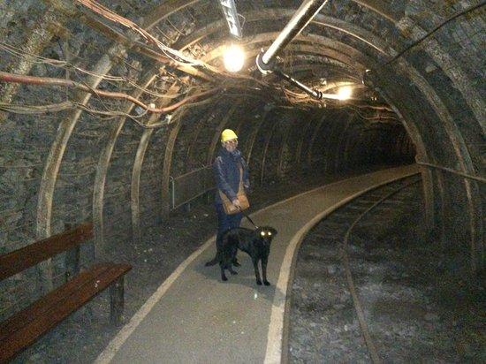 Centre historique minier - Musee de la Mine : Chiens acceptés
