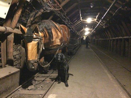 Centre historique minier - Musee de la Mine : Le cheval et... le chien