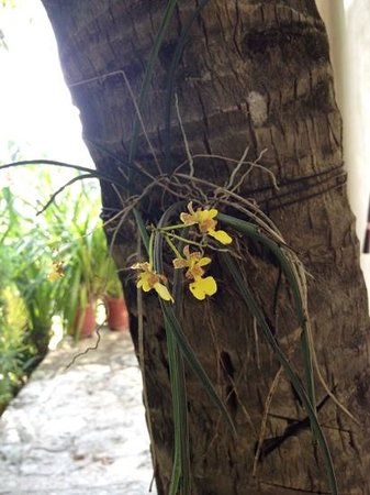 Na Balam Beach Hotel: orchids outside my room