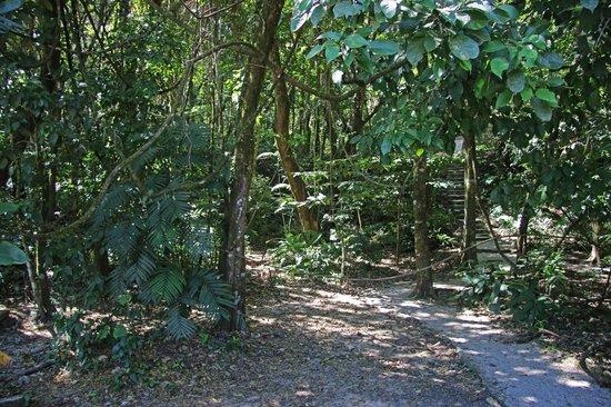 "National Park of Palenque: ""City Jungle"""