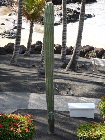 Los Fariones Hotel: Hotel grounds