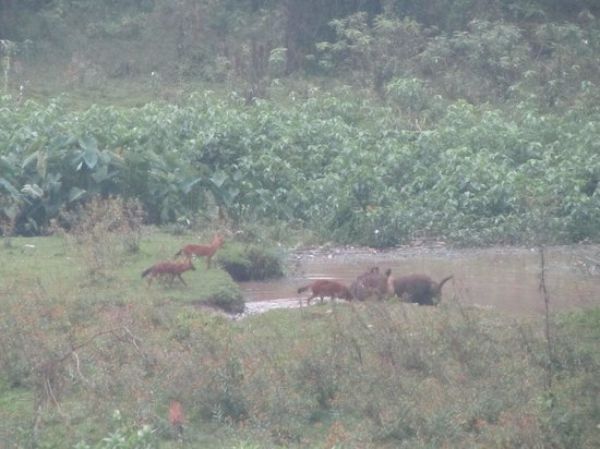Konark Homestay: wild dogs and deer