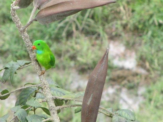 Konark Homestay: a parrot
