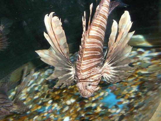 Harbin Polarland: Some fish