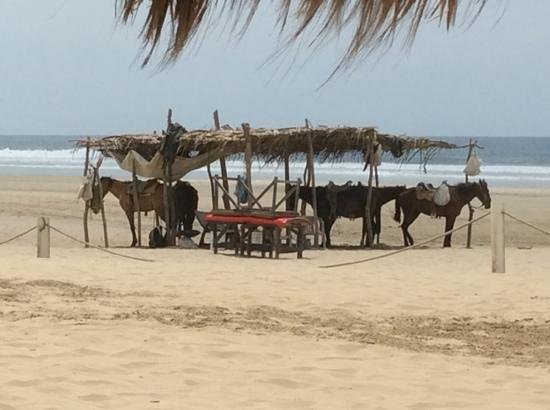The Grand Mayan Acapulco : horses at the Grand Mayan beach