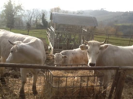 La Lombricaia: tra i tanti animali tutti ben curati