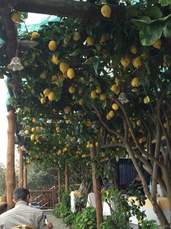 Ristorante Costa Diva: Limoni