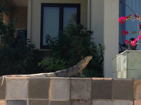 Villa Buena Onda: We loved the iguanas we saw on the property