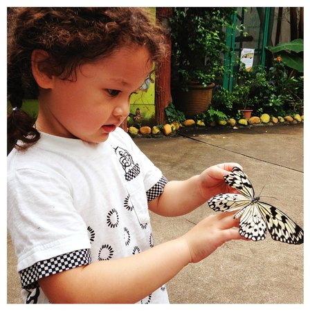 Butterfly Park & Insect Kingdom: perfect moment with the butterflies