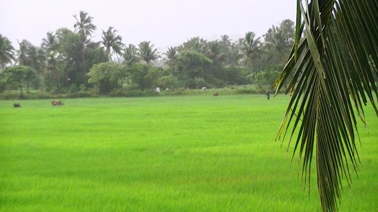 Fernlodge Studio Apartments: See the beauty of the rice field in the monsoon