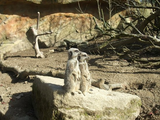Newquay Zoo: Simples!