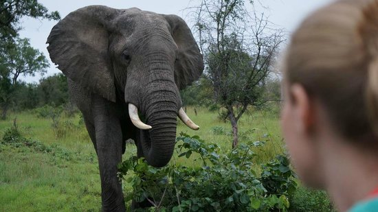 Notten's Bush Camp: Friendly elephant up close