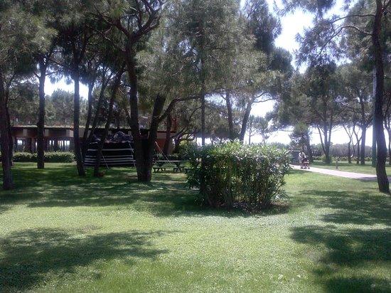 Xanadu Resort Hotel : Зеленая территория
