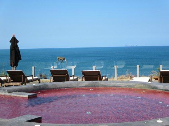 The Houben Hotel : Affen kommen zu Besuch und genießen auch die schöne Atmosphäre und Ruhe