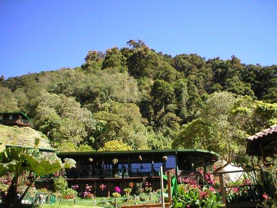 Trogon Lodge San Gerardo de Dota: The room and cloud forest.