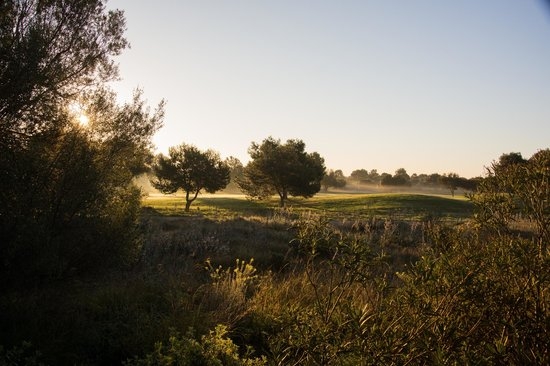 Marriott's Club Son Antem: Early morning view of the golf course