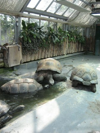 Hamburg Zoo : Riesenschildkröten