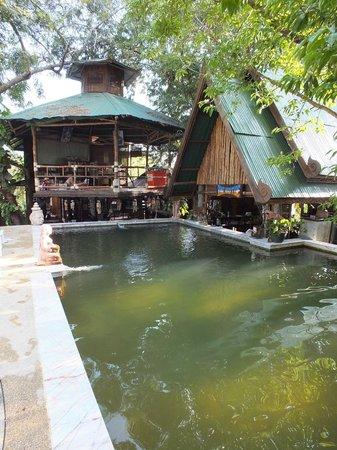 Tropical Garden Bungalows: piscine