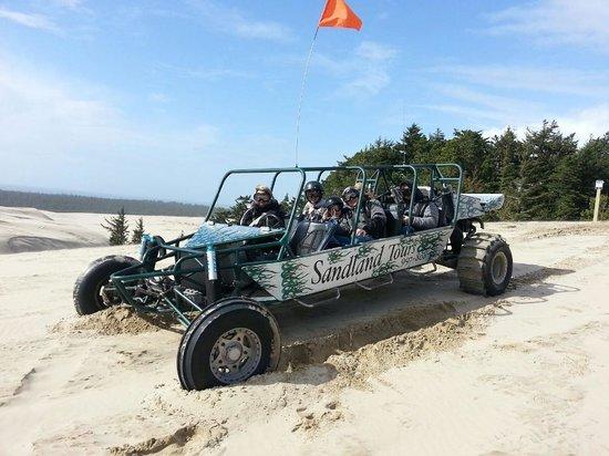 Sandland Adventures: top of the dunes