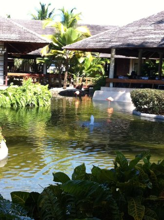 Paradisus Punta Cana: Pond with pink flamingos